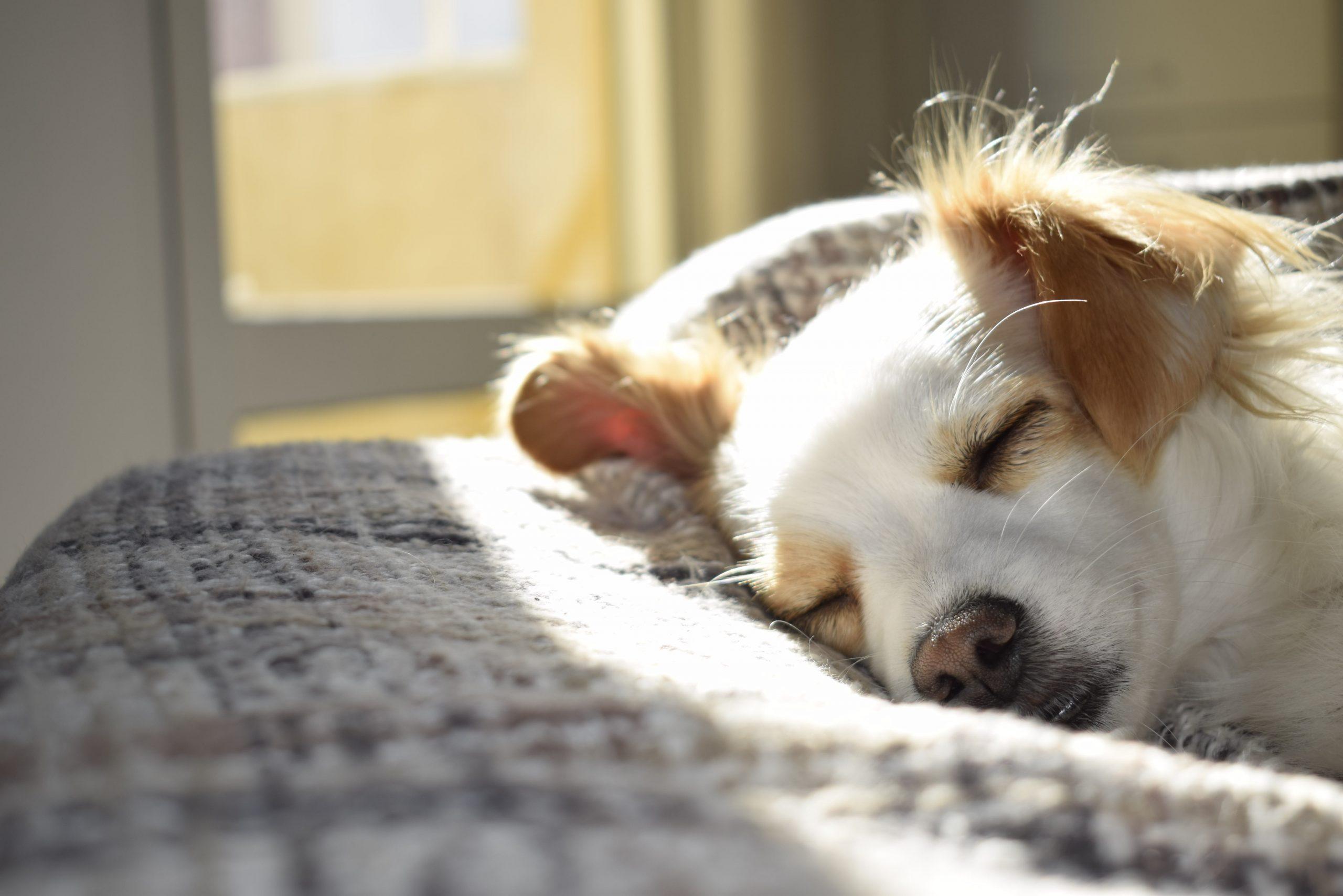 Cómo evitar pelos y suciedad del perro en la casa