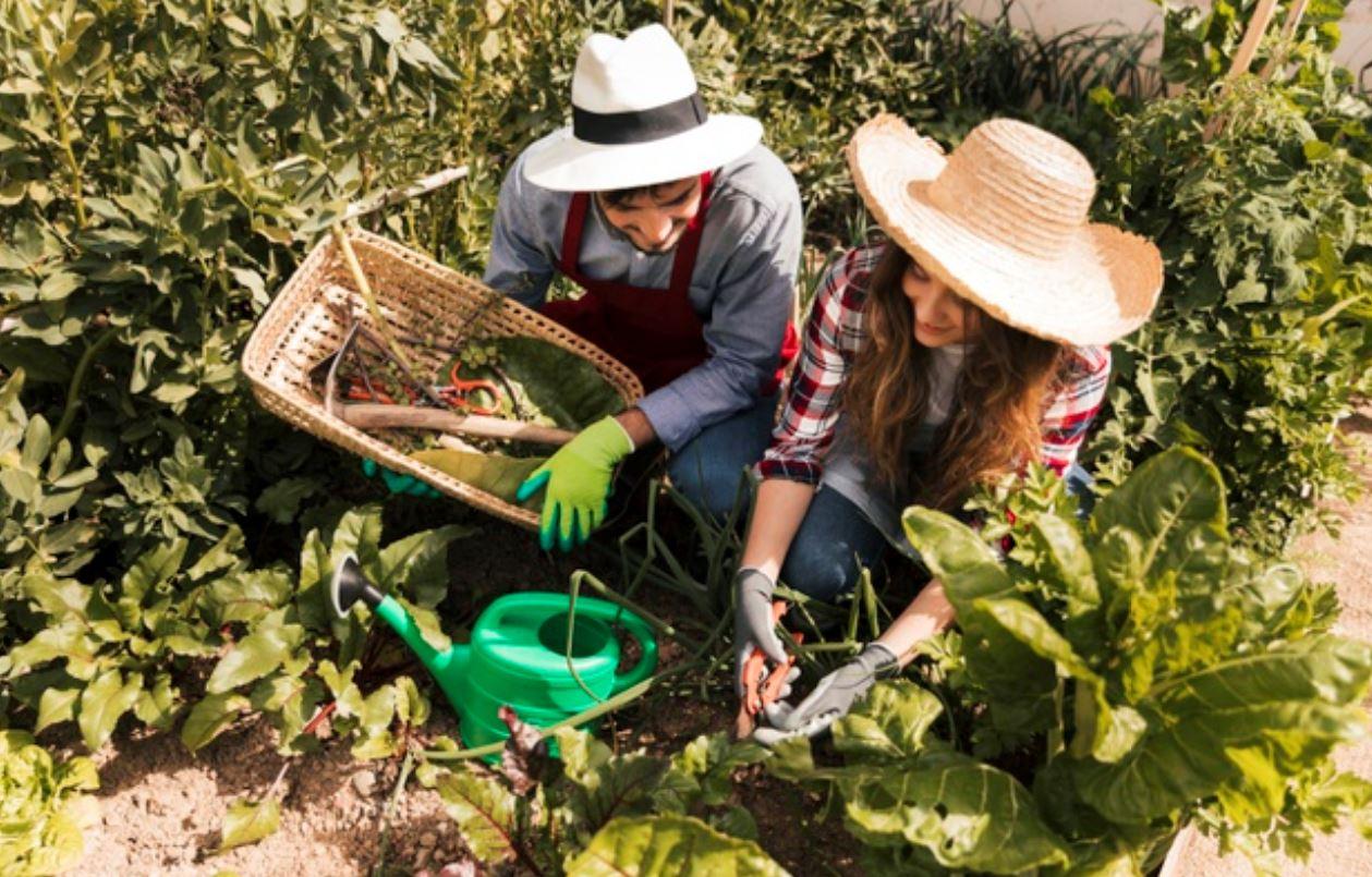 Comienza tu huerto en casa y cultiva tus propios alimentos