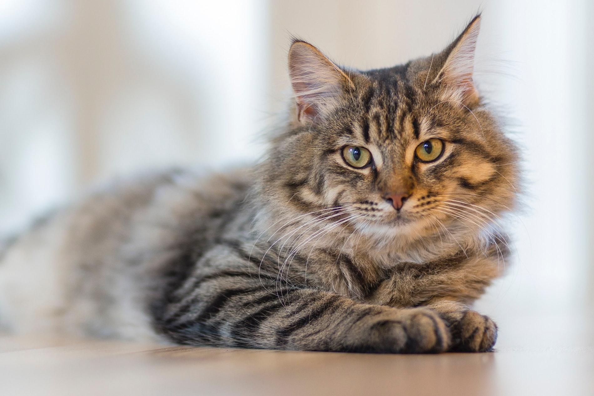 Consejos útiles para proteger a sus plantas de los gatos