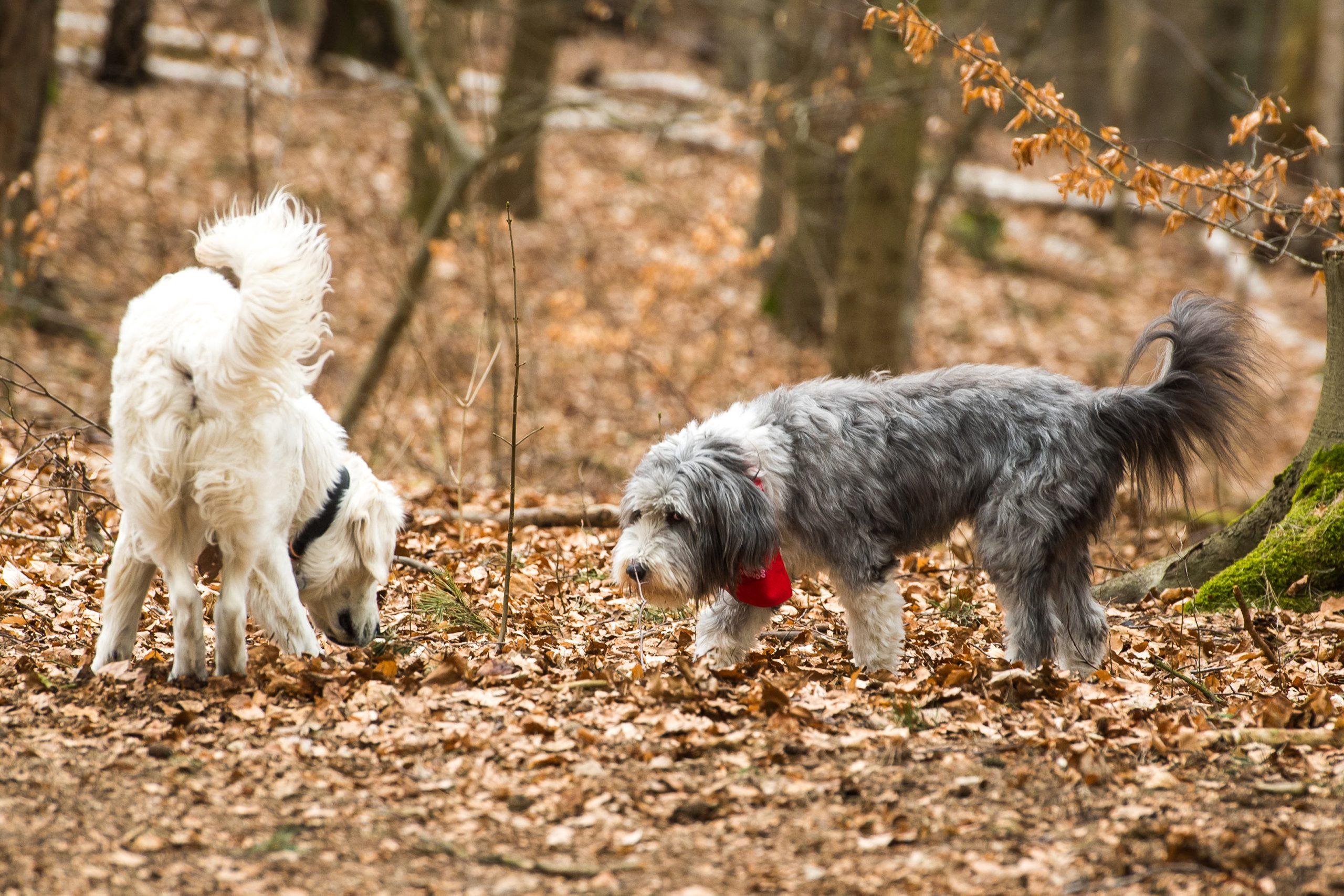 Si un perro mueve la cola, no siempre expresa alegría