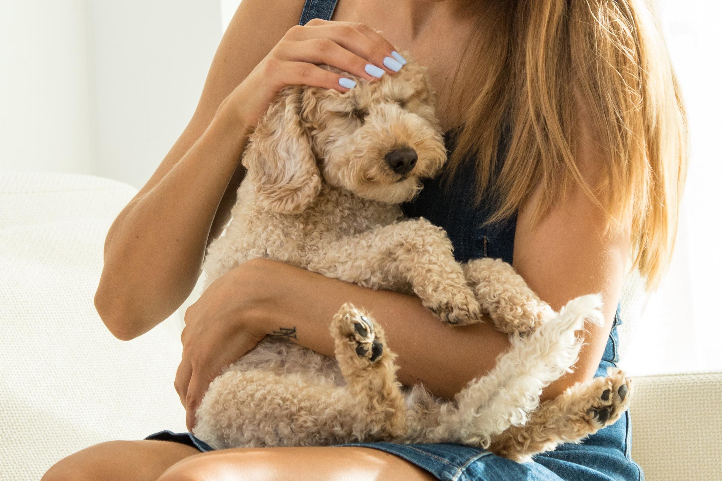 Acariciar, soplar, abrazar: cosas que no les gustan a los perros