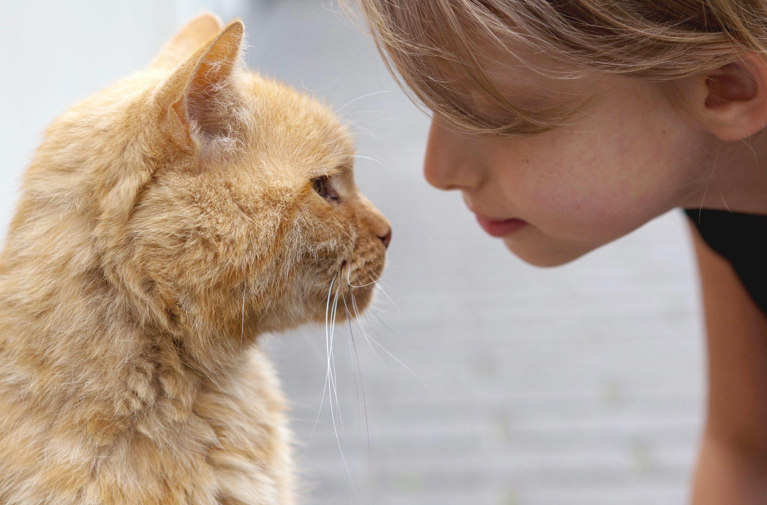 El gato expresa cariño y confianza a través del parpadeo lento