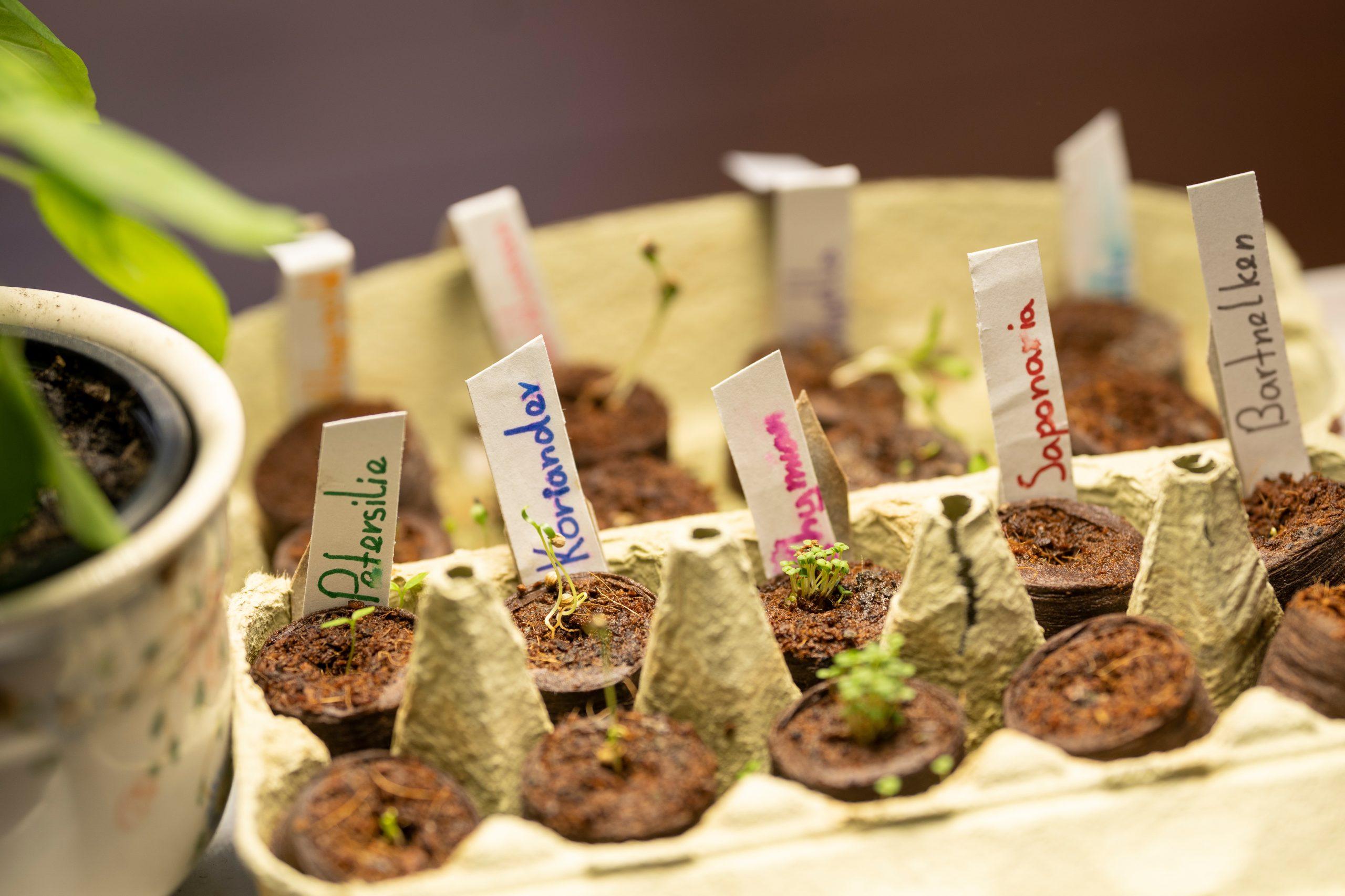 Proyecto verde para los chicos: cómo construir un mini jardín