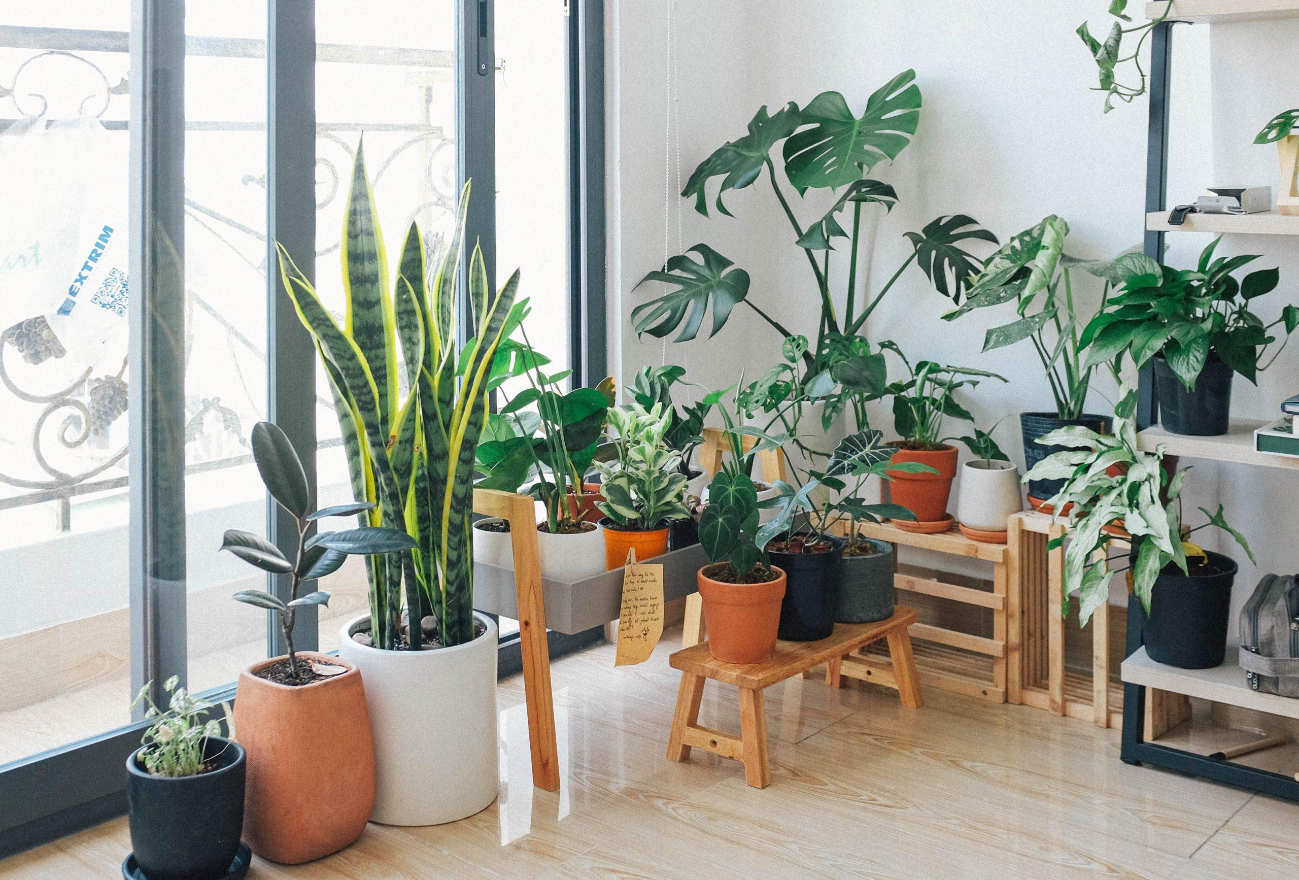 Cinco formas para decorar tu hogar con plantas