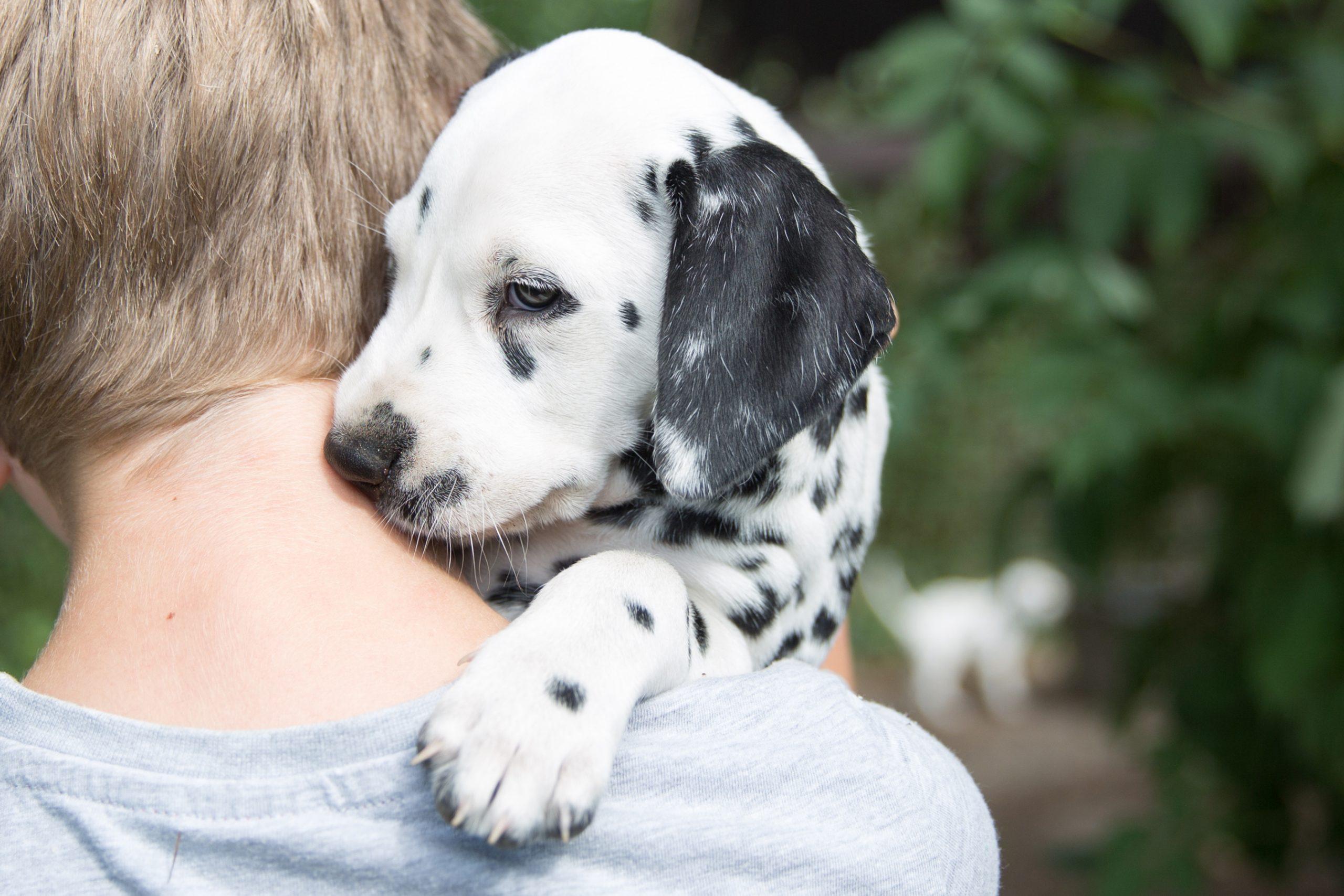 Tips para que el cachorrito se sienta bien en el nuevo hogar