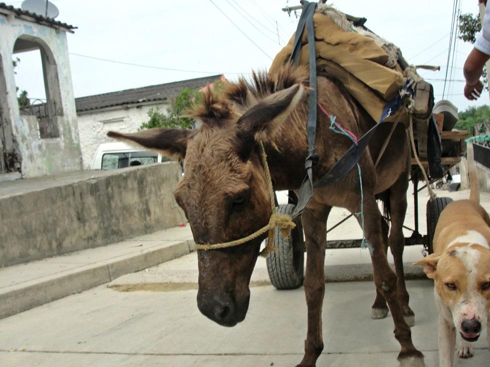 Maltrato-animal-caballo