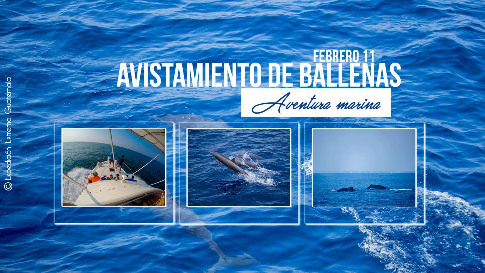 avistamientos de ballenas en guatemala