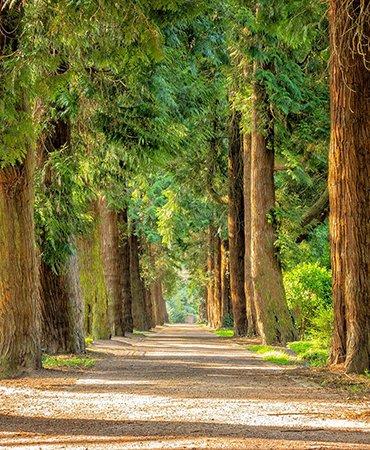 UC Davis Arboretum and Public Garden