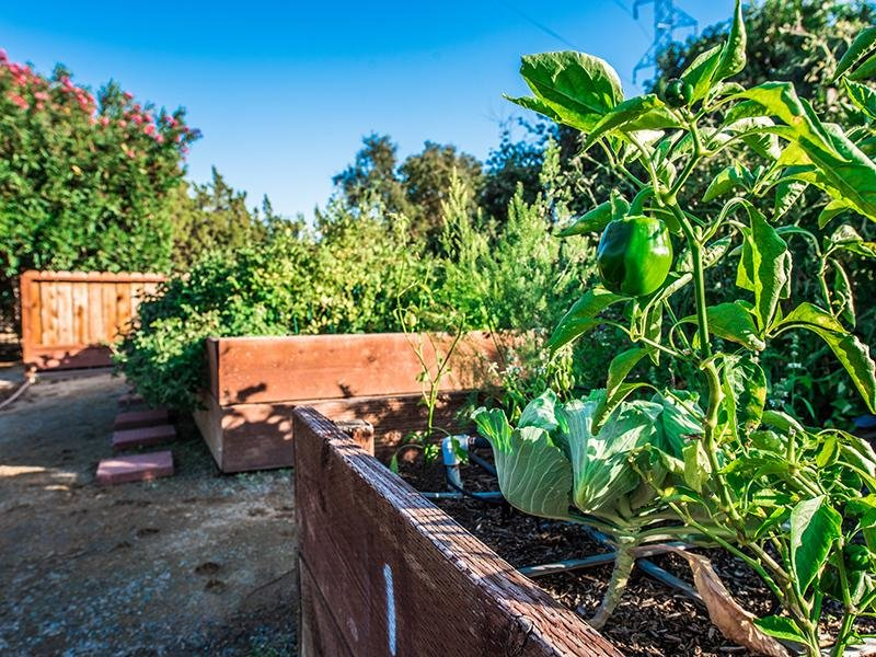 Community Garden | The Eleven Hundred Apartments in Sacramento CA