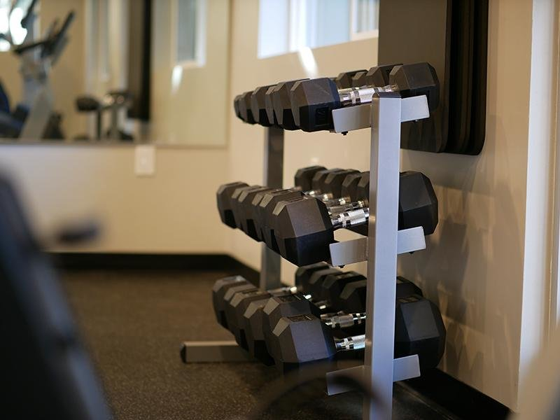 The Gym | The Vue