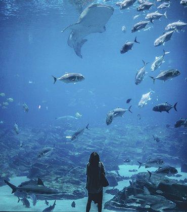 The Aquarium of Boise