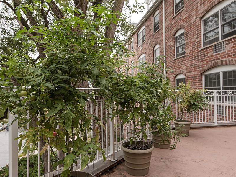 Balcony | Lilac Apartments