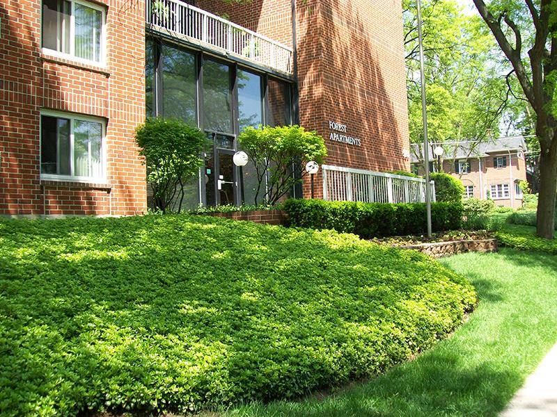 Beautiful Landscaping | Forest Apartments
