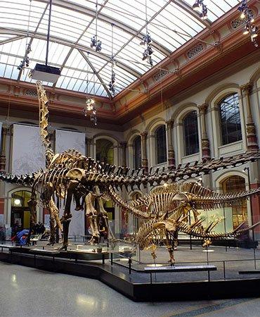 Arizona Museum of of Natural History