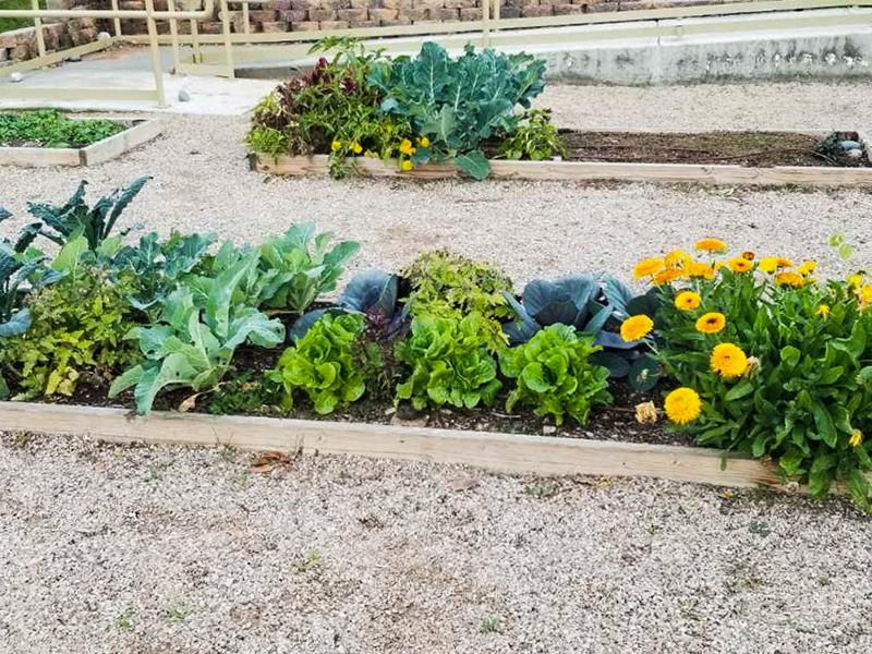 Community Garden | Dana Park