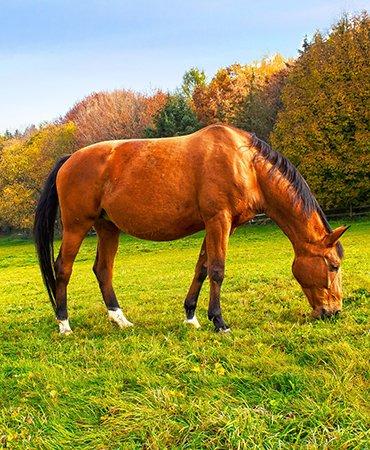 KOLI Equestrian Center