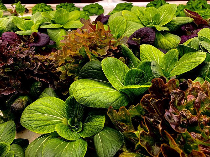 Hydroponic Garden | Plants | The Arbors of Sweetgrass