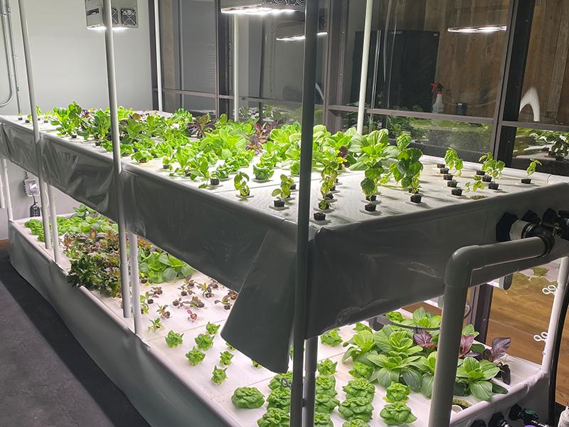 Hydroponic Garden | The Arbors of Sweetgrass