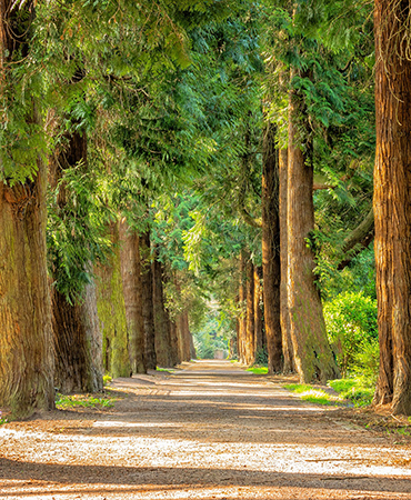 Hamlin Park