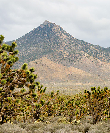 The Phoenix Mountains Preserve