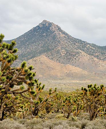 The Phoenix Mountains Preserve