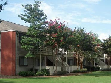 Trees at Park at Moss Creek Apartments