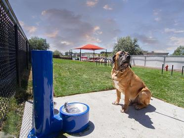 Dog Park | Foothill Place Apartments