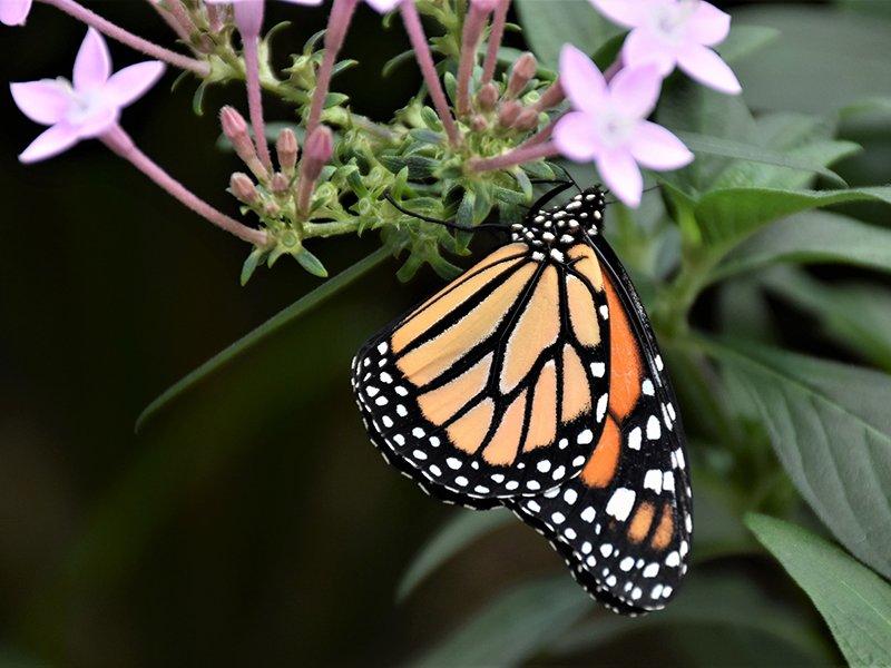 Denver Botanic Gardens nearby Powderhorn Apartment Community