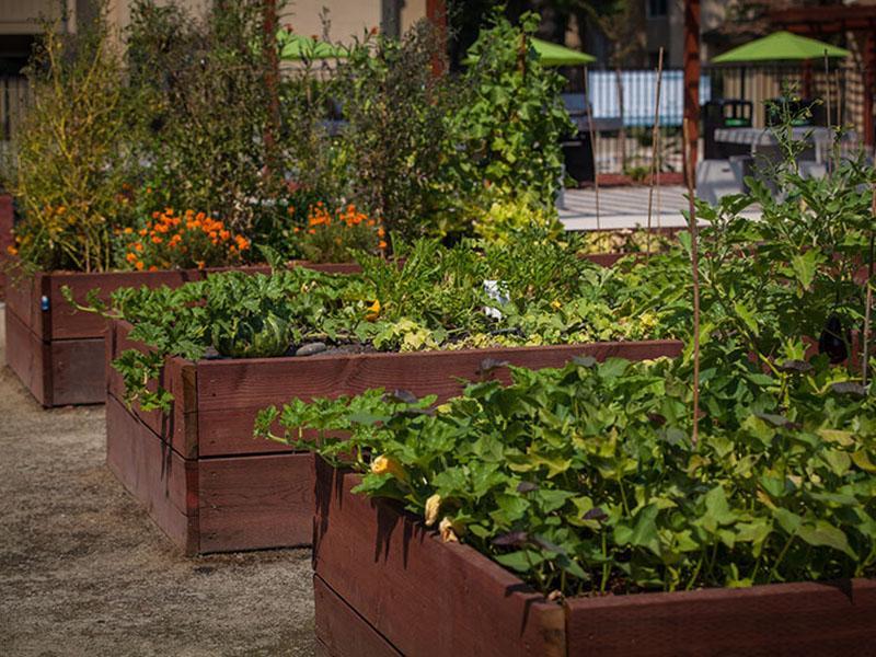 Garden | Rosemont Park Sacramento Apartments