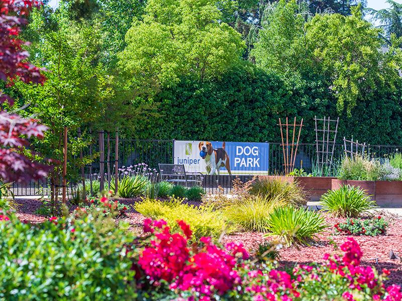 Dog Park | The Juniper Apartments in Sacramento, CA