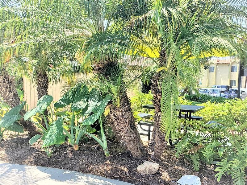 Beautiful Landscaping | Anaheim Cottages