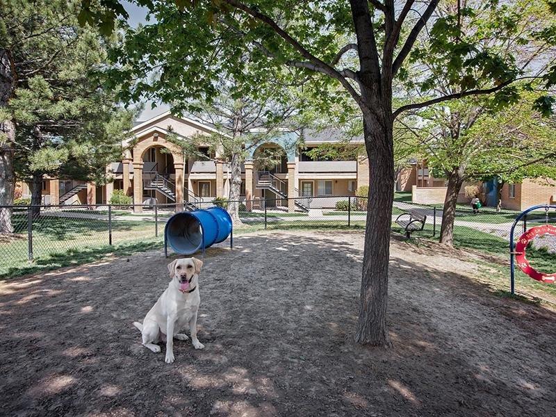 Pet Park | Embarc at West Jordan