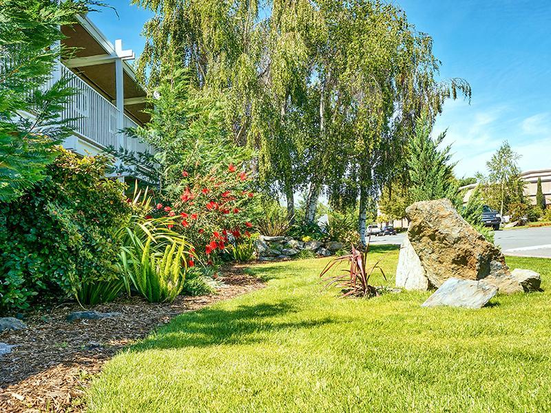 Exterior Landscape - Pleasant Hill California