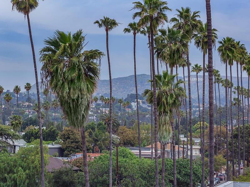 View  | Hollywood View Towers