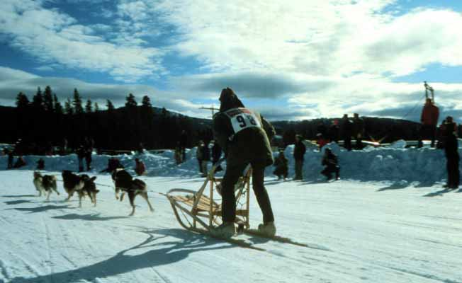 dogsled racing