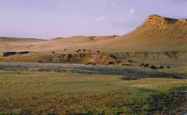 Cross M Working Guest Ranch | Missouri River Country