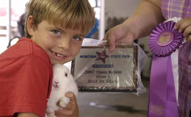 Open Rabbit Best of Show