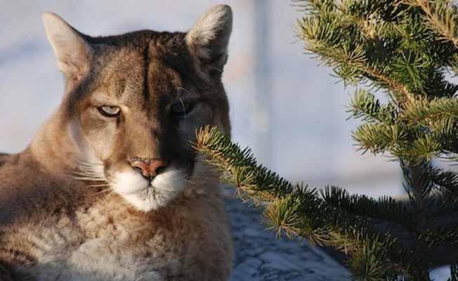 Yellowstone Wildlife Sanctuary profile image