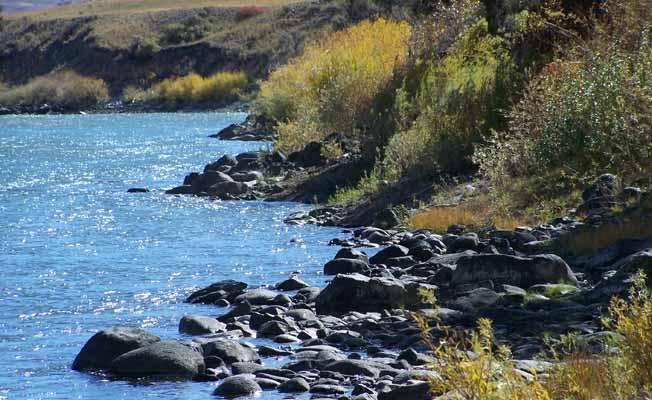 Yellowstone Park Riverfront Cabin #7 profile image