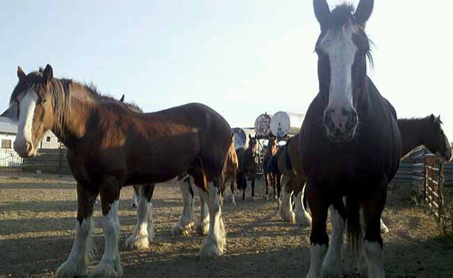 Sand Creek Clydesdales Ranch LLC | Missouri River Country