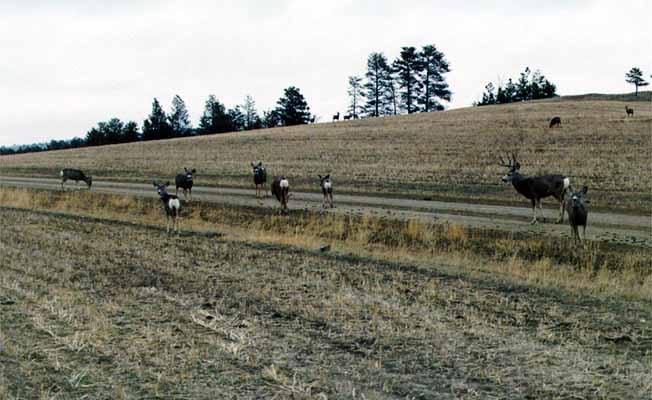 7-V Ranch | Missouri River Country