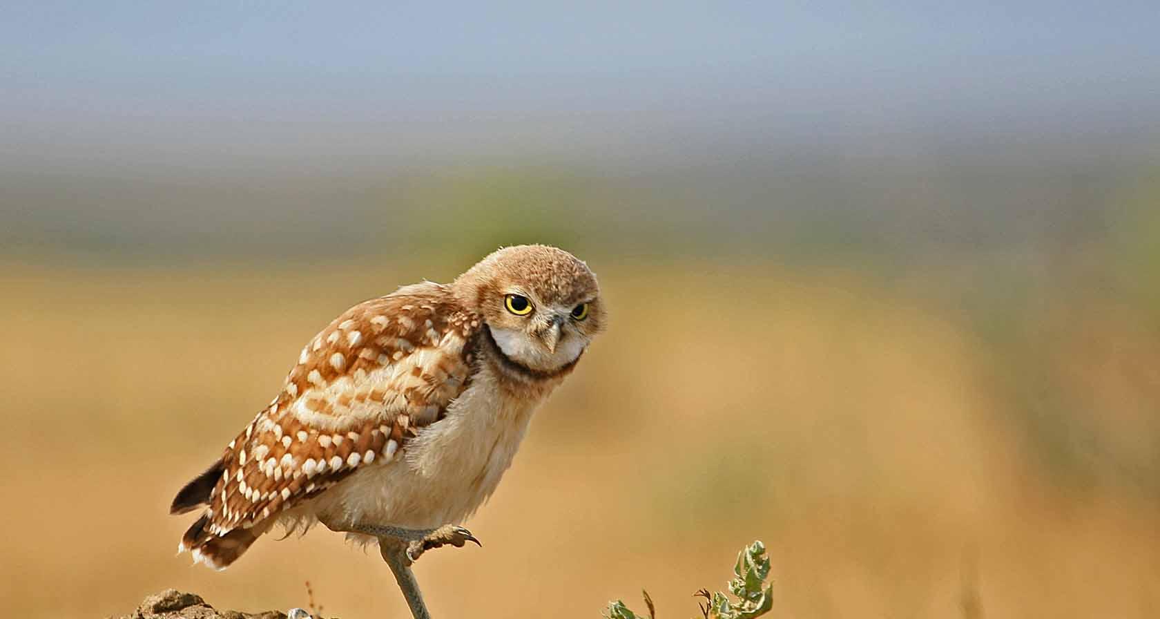 American Prairie Reserve profile image
