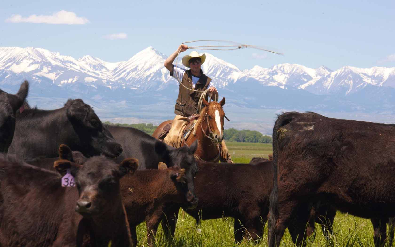 Montana Bunkhouses Working Ranch Vacations LLC profile image