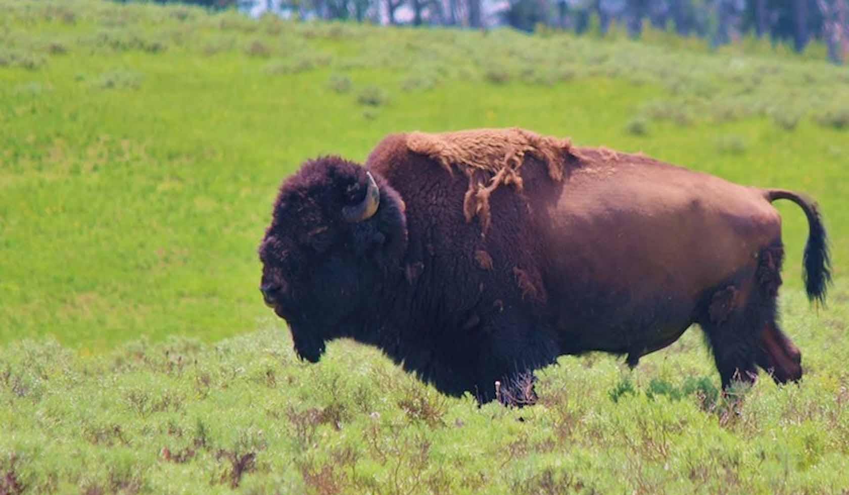 MonTanya Yellowstone Properties & Concierge, LLC profile image