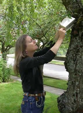 Woman checks an insect trap attached to tree.