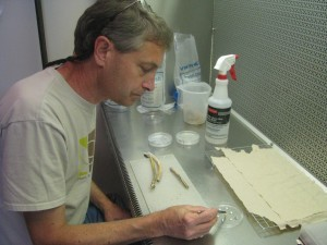 Jim davis uses tweezers to work separate specimens on a lab bench.
