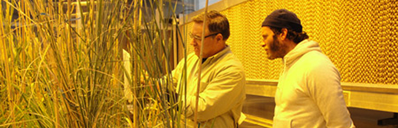 Two men examine grasses.