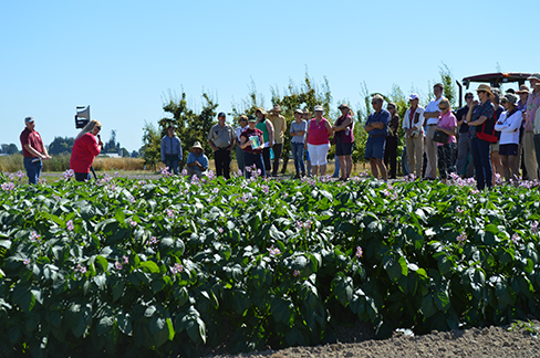 Field day group listens to a presentation in a potato field.