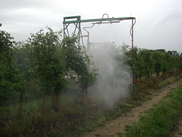 Field application of Acramite 50WS to raspberry canes.