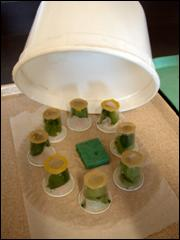 Sampled leaflets are stored in condiment cups inside an individual salad crisper.
